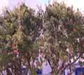 ΧΩΡΑ - Κουφονήσια - Φωτογραφίες